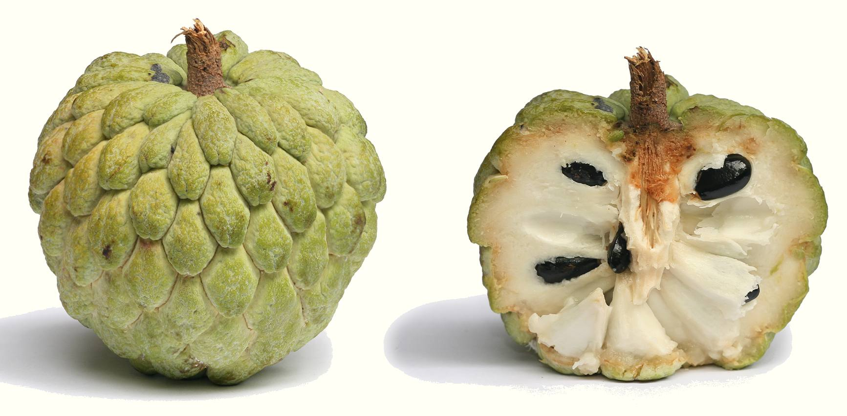 jamaican custard apple - photo #9